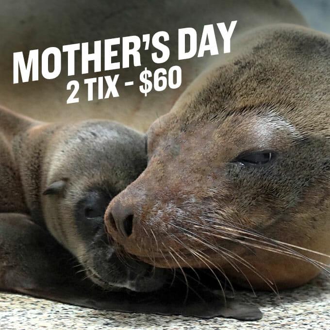 Mother S Day At Georgia Aquarium May 12 2019 Georgia
