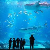 Visit Today | Georgia Aquarium | Located in Downtown Atlanta, Georgia 12