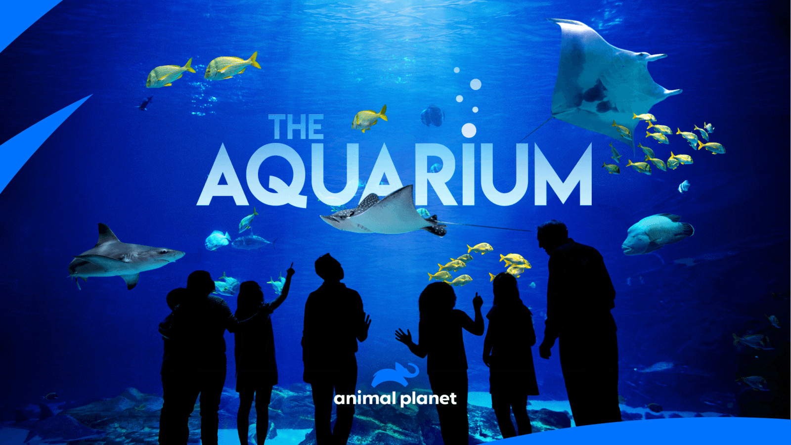 "All-New Series ""The Aquarium"" 1"