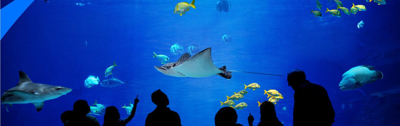 """All-new TV Series """"The Aquarium"""""""