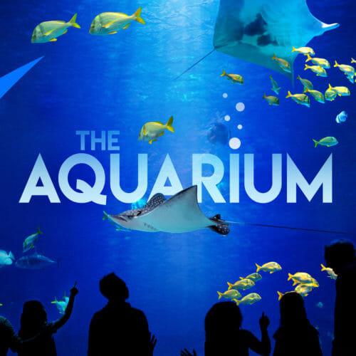 """All-new TV Series """"The Aquarium"""" Episode 1"""