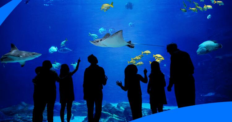 """""""The Aquarium"""" 1"""
