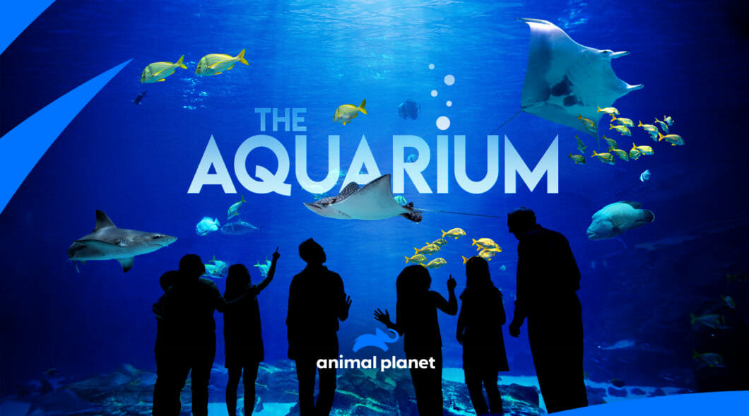 Visit Today | Georgia Aquarium | Located in Downtown Atlanta, Georgia 10