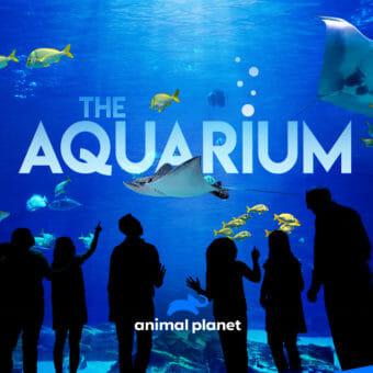 Visit Today | Georgia Aquarium | Located in Downtown Atlanta, Georgia 10