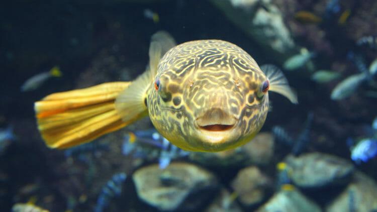 Visit Today | Georgia Aquarium | Located in Downtown Atlanta, Georgia 27