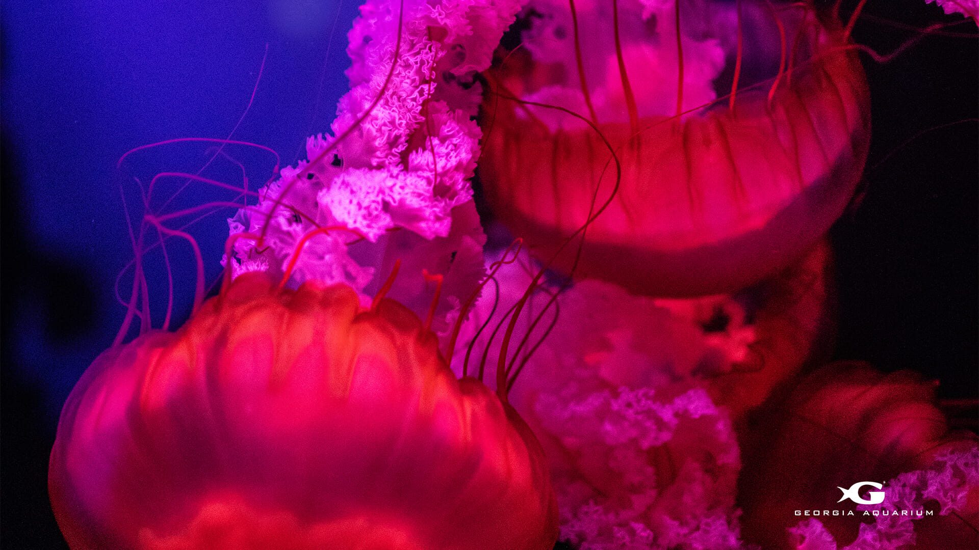Georgia Aquarium Coral Reef Awareness Week