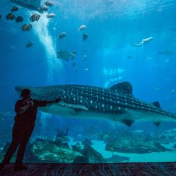Whale Shark Day 3
