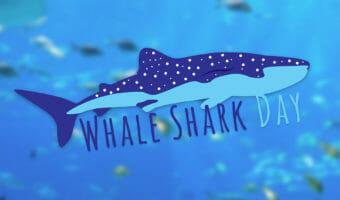Whale Shark Day 5