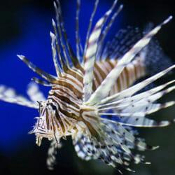 Visit Today | Georgia Aquarium | Located in Downtown Atlanta, Georgia 46