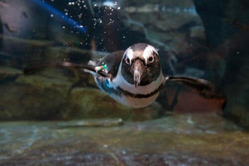 Penguin Pale Ale 3