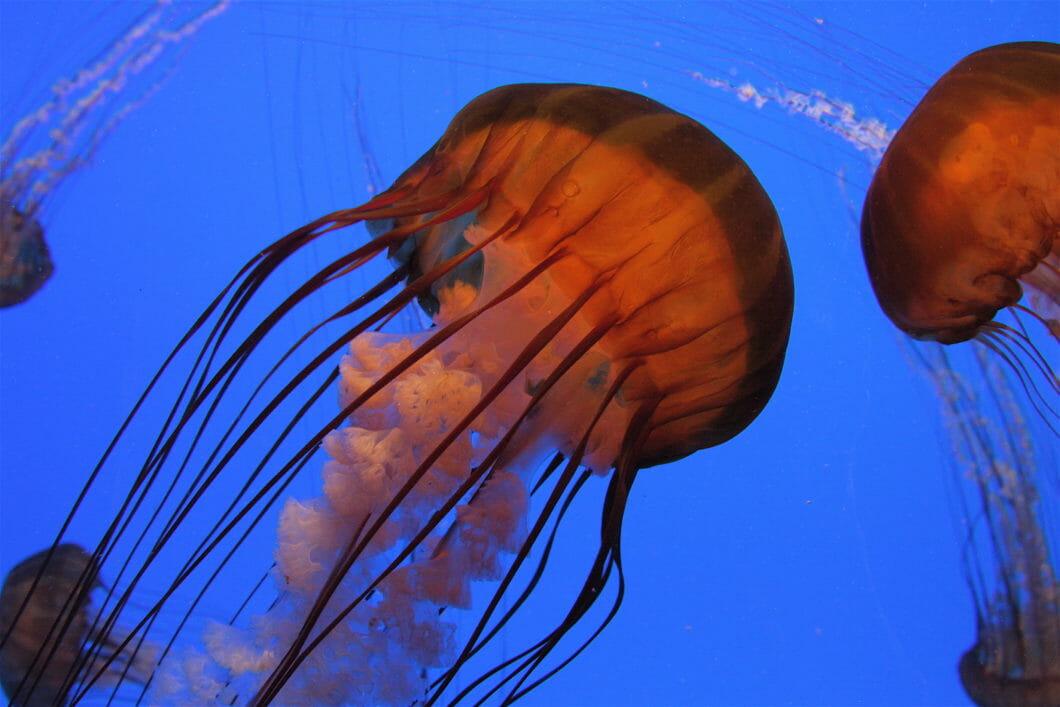 Visit Today | Georgia Aquarium | Located in Downtown Atlanta, Georgia 53