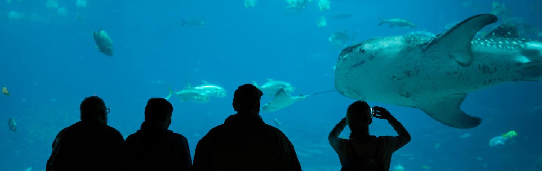 Georgia Aquarium Membership 4