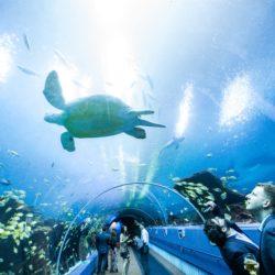 Ocean Voyager Virtual Tour