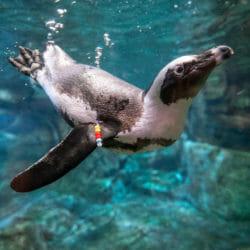 Visit Today | Georgia Aquarium | Located in Downtown Atlanta, Georgia 75