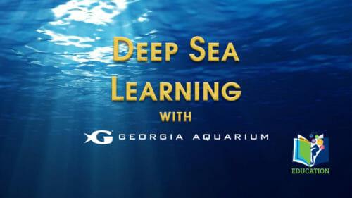 Deep Sea Learning with Georgia Aquarium's Education Department