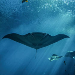 Mindful with the Mantas