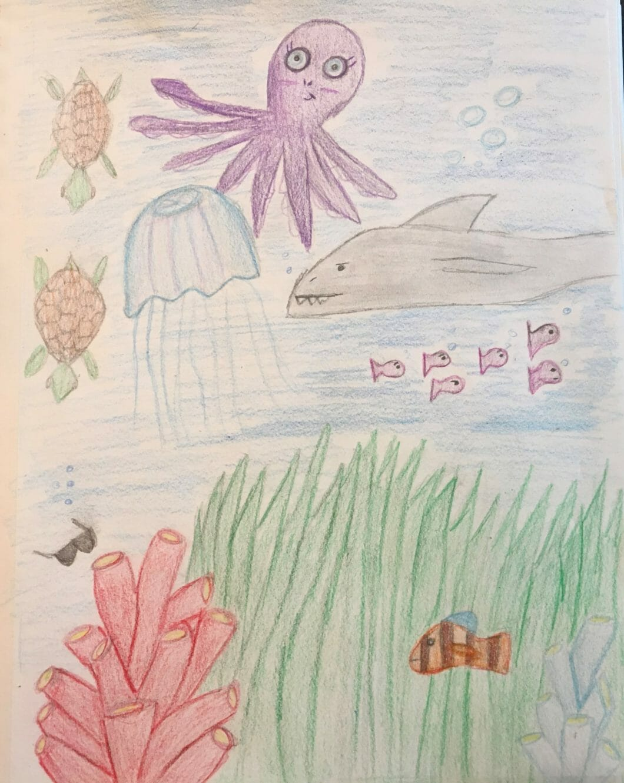 At-home Learning with Georgia Aquarium 38