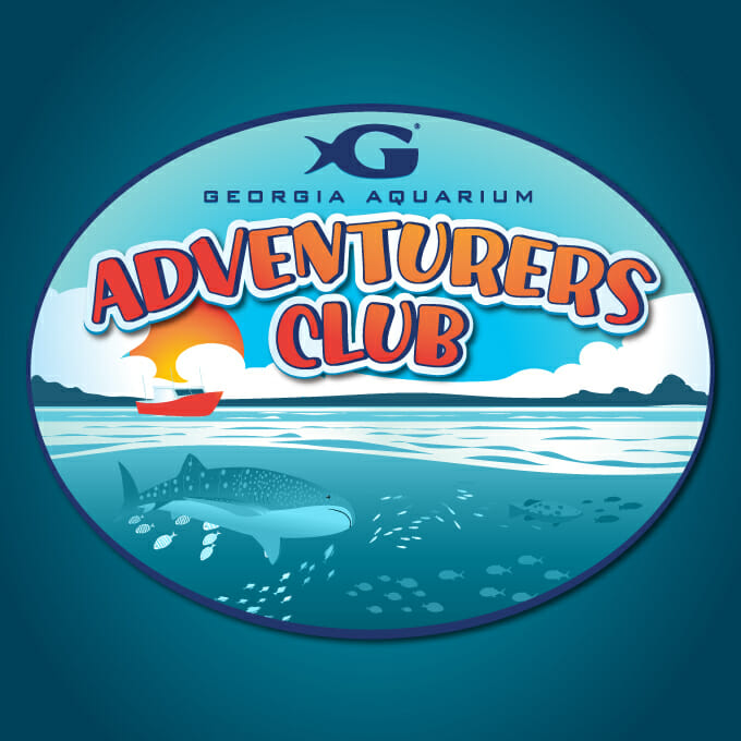 Georgia Aquarium's Adventurer's Club 4