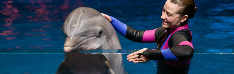 Dolphin Presentation