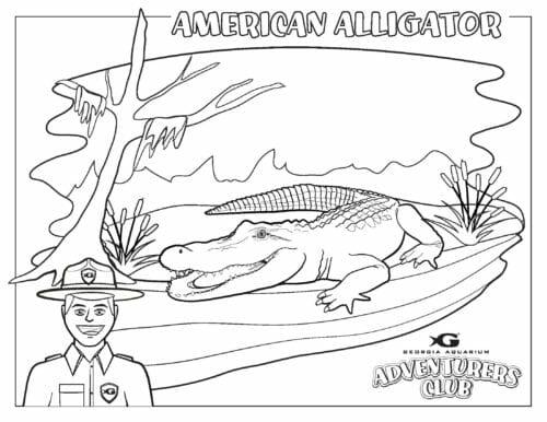 Georgia Aquarium's Adventurer's Club 1