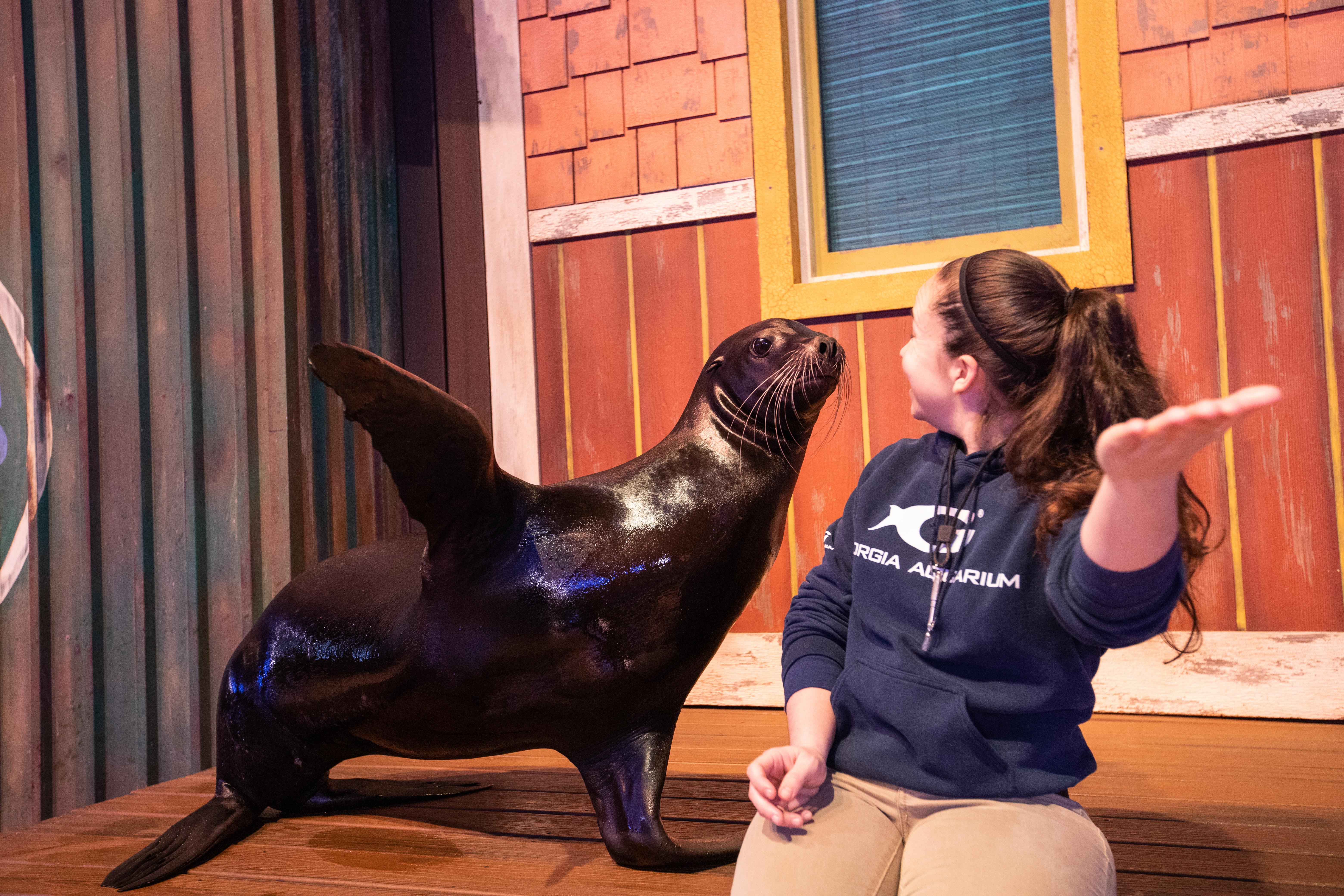 Visit Today | Georgia Aquarium | Located in Downtown Atlanta, Georgia 145