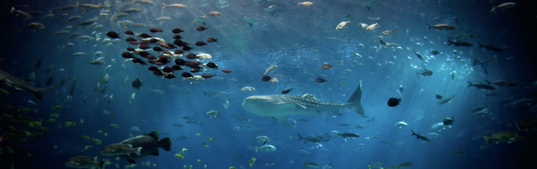 Visit Today | Georgia Aquarium | Located in Downtown Atlanta, Georgia 157