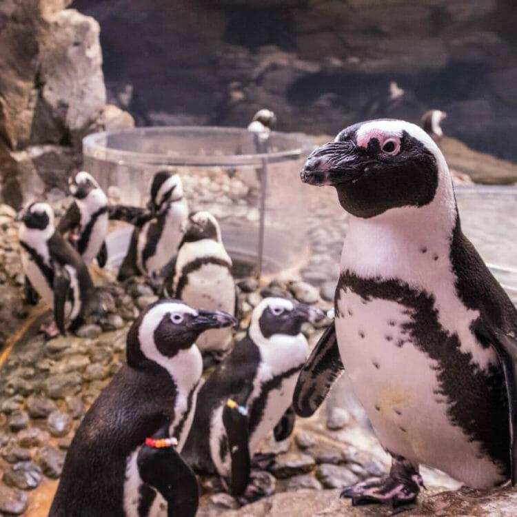 Penguin Paintings 5
