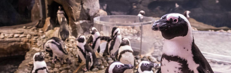 Penguin Paintings 4