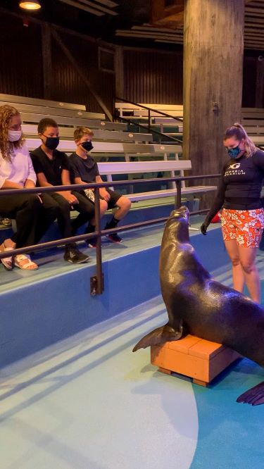 Sea Lion Up Close Program 2