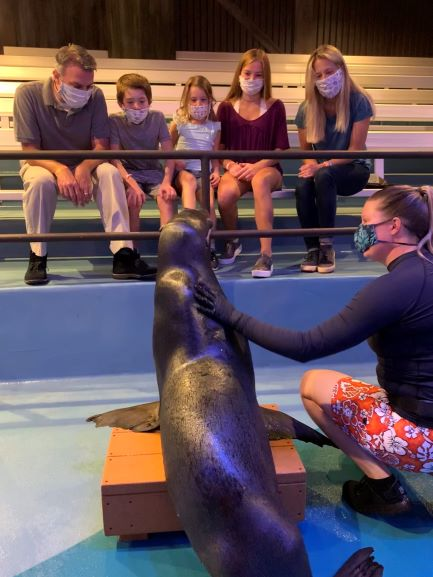 Sea Lion Up Close Program 1