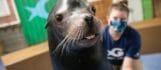 Visit Today | Georgia Aquarium | Located in Downtown Atlanta, Georgia 153