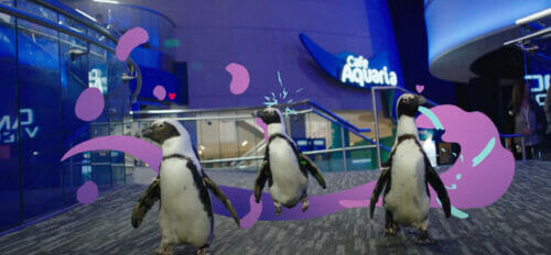Georgia Aquarium has Reopened to the Public 1
