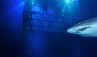 Shark Cage Dive 6