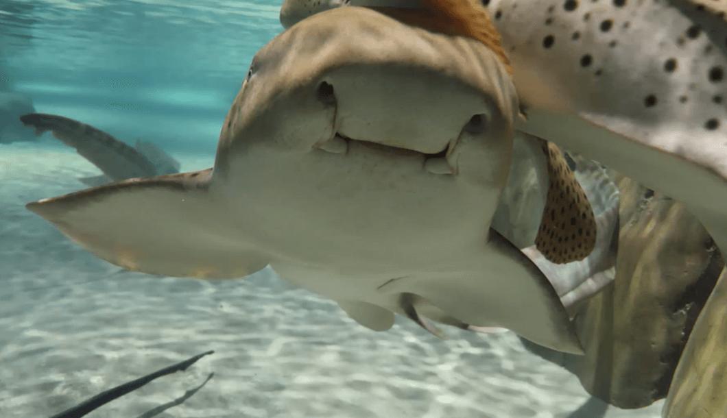 Shark & Ray Immersion