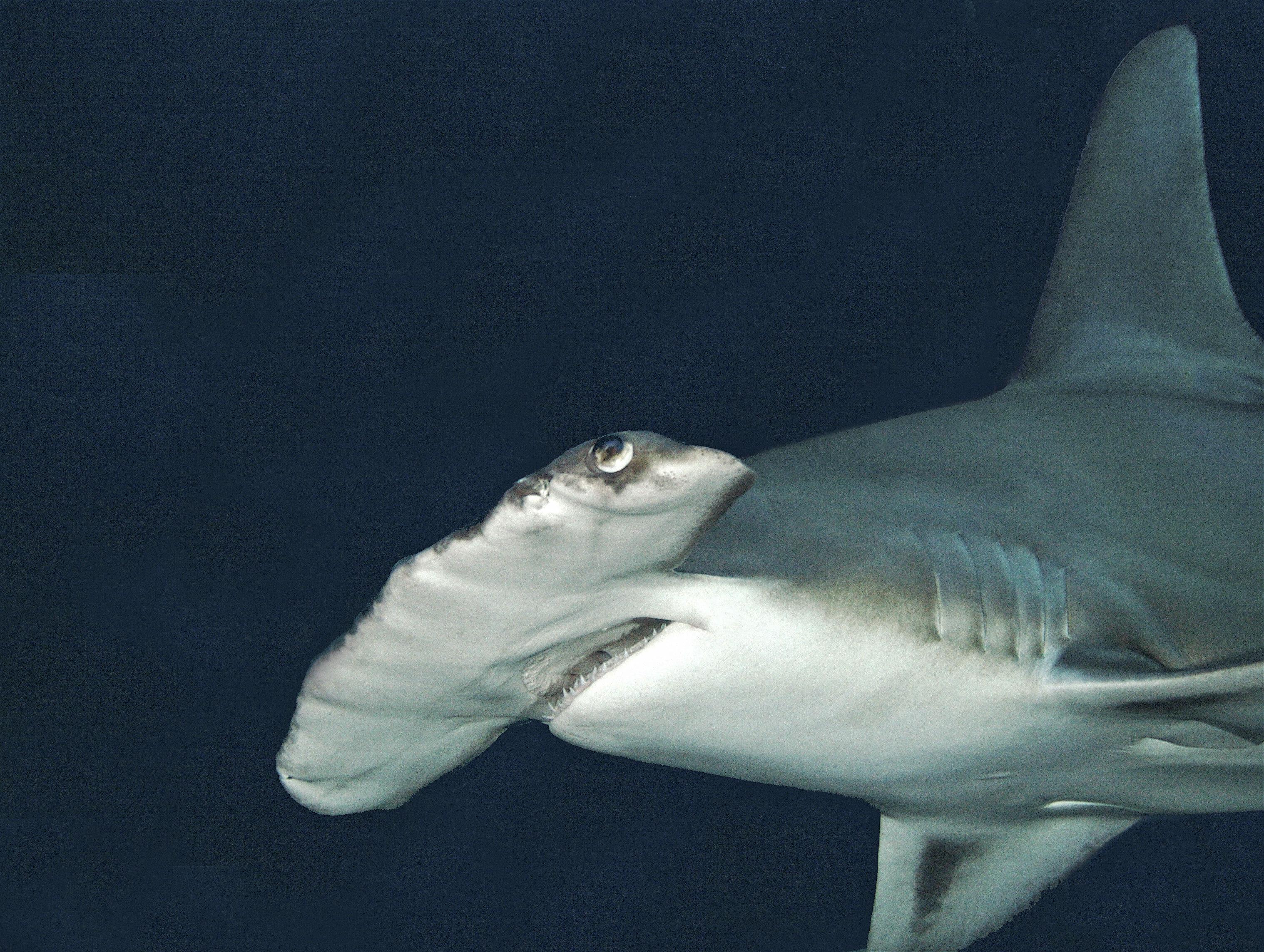 Shark Cage Dive Program