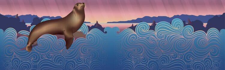 Sea Lion Sour 1