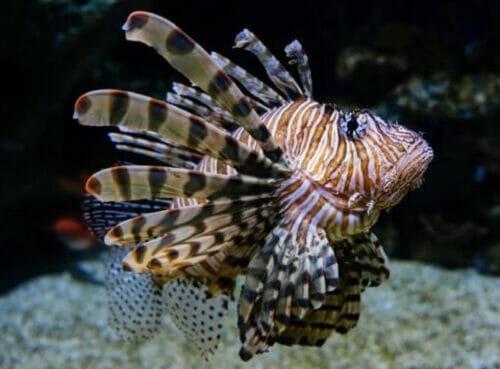Aquarium Closing 6