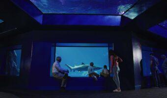 SHARKS! Predators of the Deep 7