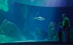 Open to the Public | Visit Today | Georgia Aquarium | Located in Downtown Atlanta, Georgia 52