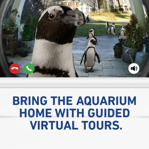 Guided Virtual Tours 11