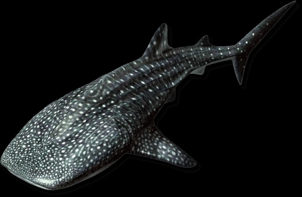 Open to the Public | Visit Today | Georgia Aquarium | Located in Downtown Atlanta, Georgia 12