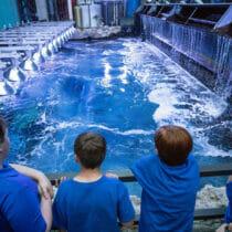 Open to the Public   Visit Today   Georgia Aquarium   Located in Downtown Atlanta, Georgia 23