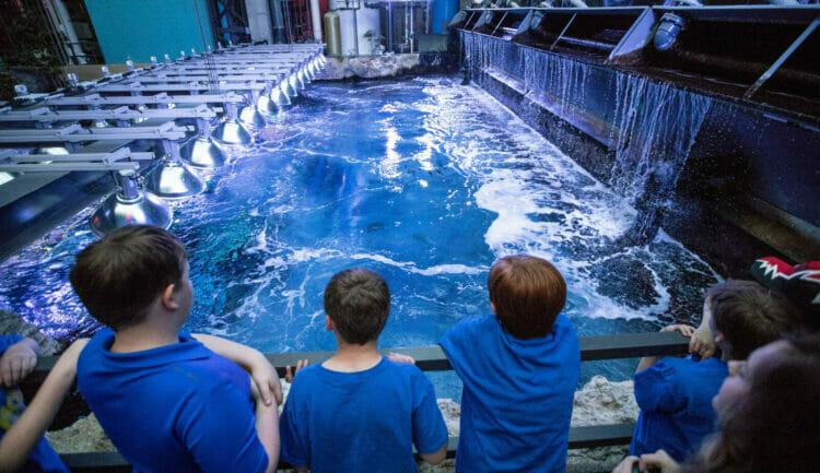 Open to the Public | Visit Today | Georgia Aquarium | Located in Downtown Atlanta, Georgia 23