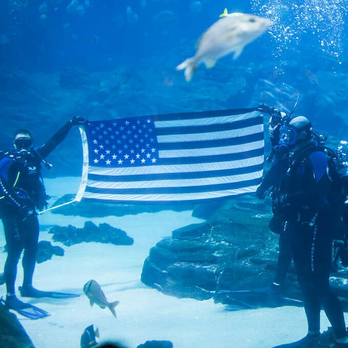 Open to the Public | Visit Today | Georgia Aquarium | Located in Downtown Atlanta, Georgia 26