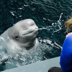 All New Beluga Encounter 7