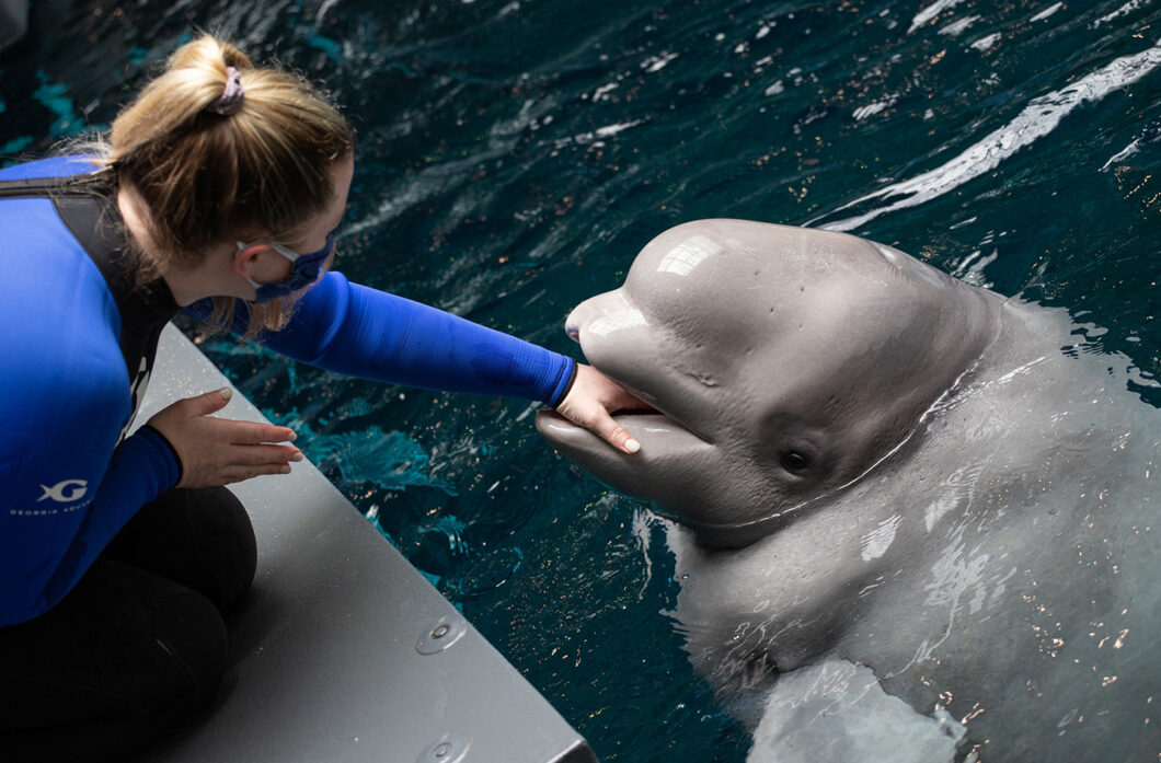 All New Beluga Encounter 1